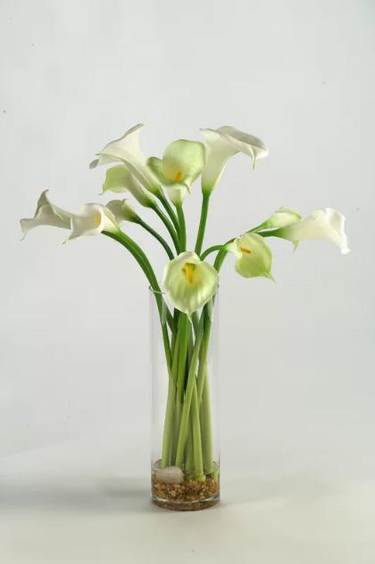 با نگهداری این گلها از آلودگی هوا فرار کنید!