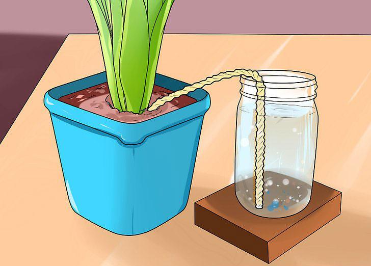 استفاده از نخ برای آبیاری گیاهان آپارتمانی