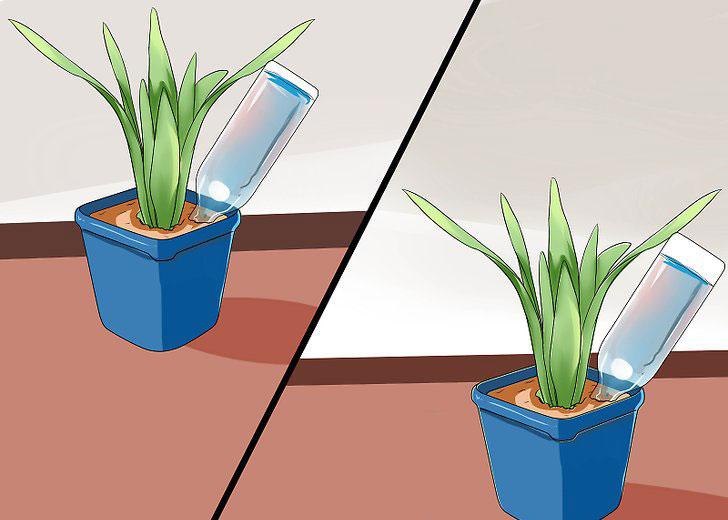از بطریهای پلاستیکی برای آبیاری گیاهان آپارتمانی به هنگام مسافرت استفاده کنید