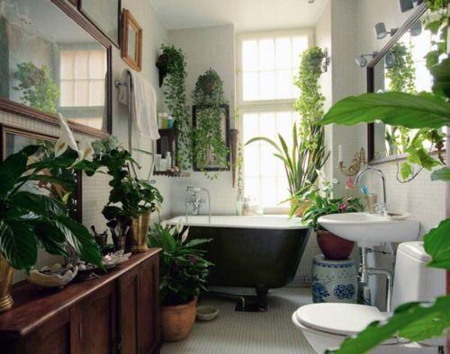 استفاده از آبیاری در حمام برای آبیاری گیاهان به هنگام مسافرت